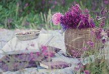 Color:: Purp Walk / Purple inspiration, ideas and interiors.