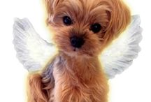 Yorkie Love!!! / Maya...my little princess...gone but never forgotten!