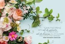 Flowers & beauties