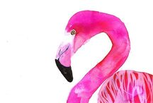 Flamingo Faves / by Tori Tait | Thoughtfully Simple