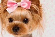 Puppy Coiffure