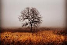 Art and Photography / by Keegan Nitz