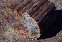 Petrified Wood - AZ State Symbol / Petrified wood is the state Fossil, became a state symbol in 1988... found in Northern Arizona.