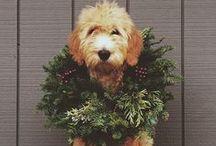 festive + bright