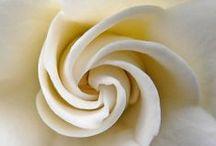 White / by Rita Cassidy
