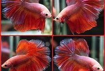 aquarium friends / loving on these little fish friends