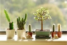 cacti, succulents & terrariums. / i like to collect cacti.  they have names.  like doris, elvis and elizabeth. / by Rebecca H