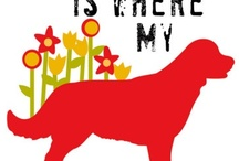 Dog My Friend / I can't imagine life without a dog ..... or 2 or 3. / by Kym Ruiz