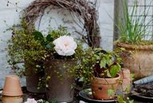 the home: in the garden. / mary, mary, quite contrary, how does your garden grow? / by Rebecca H