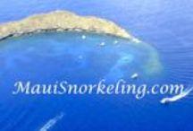 Maui Snorkeling / Everything Maui Snorkeling, Snuba and the Lani Kai aka Friendly Charters. http://www.mauisnorkeling.com