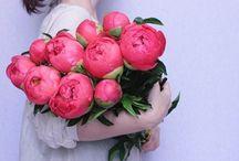 {FLORALS & BOTANICALS} / by North Coast Luxury Weddings - Lauren Fraser