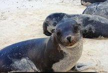 capstone: marine mammal rehab design