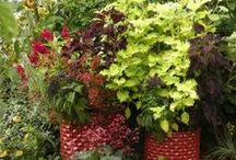 Container Gardening   Gardening in Pots / How to have great container gardens, tips on gardening in pots. Potscaping is a great addition to any garden, especially an urban garden.