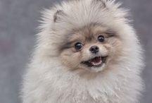 animals / I love fur babies  / by Maggie Jones🌞