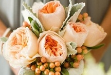 Wedding / Anything and everything fabulous about wedding, ideas, inspirations, colors, dresses, themes, venues, favors, bouquets, and more!