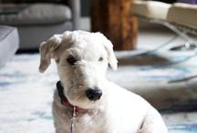 dog / by Julie Hughes