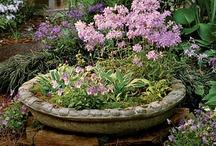 Gardening/Yard Ideas / by Beth Allen