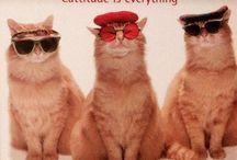 Cats, cats cats