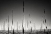 Black & White / by Thomas Menk