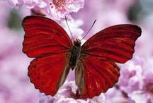 Beautiful Butterflies / Beautés de la nature. On ne se lasse pas d'admirer leur grâce et leur légèreté ! Beauties of nature... I never tire of admiring their grace and lightness!