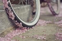 || BICICLETA || / by Christine O'Connell