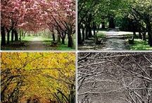 The Changing Seasons / The colors of winter, spring, summer and fall / autumn. Seasonal landscapes.