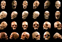 skulls / Once again this board has graphic content so please do not look at it if that offends you  / by Rosalee Martinez