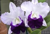 Orchids / by Kim MacMillan