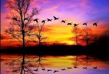 Beautiful / by Lisa Kershner
