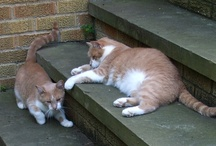 Cats / Some are close friends, some are unknown to me, but intriguing, nevertheless! / by Susan Barchard