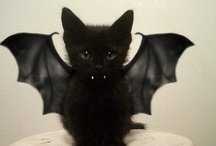 Black Magic / Trick or treat...? No matter how you play it, get ready: Halloween is here!