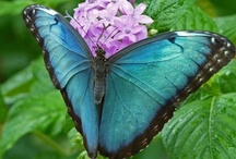 Butterflies and other Insects: Nature's Beauty / Butterflies and other Insects