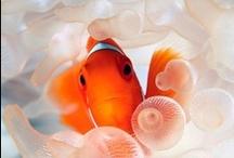Sea Life: Nature's Beauty / Sea Life