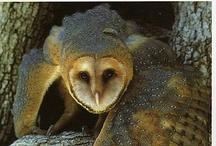 Owls / I like owls.