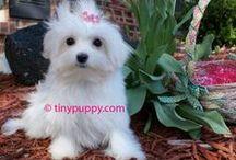 Puppy Love / by Kimberley Munro