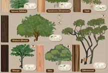 Árvores e plantas