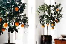 Decor / by Libby Horwitz
