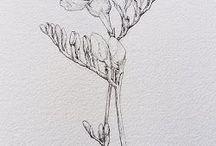 hue .  lavender