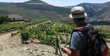 Full-day Guided Douro Walking Tour / https://www.portugalgreenwalks.com/activities/full-day-guided-douro-walking-tour/