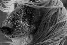 Doggies / by Caroline Lawton