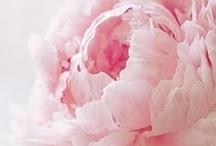 bloom / by Courtney Bachmann
