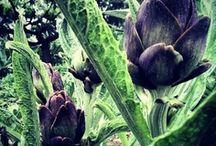 My Urban Farm / Food+