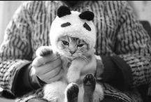 Cat Cat Cute