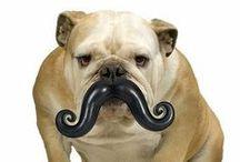 MOVEMBER /  #Movember #Prostate #Cancer #Mens #Health #mustache