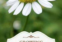 Growing Herbs - Medicinal / Growing Medicinal Herbs in the garden.