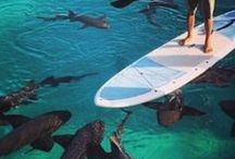SUP and Surfing / Stand Up Paddle Boarding and Surfing