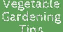{Vegetable Gardening Tips} / Tips for Vegetable Gardening! Contributors welcome!  Please keep pins on topic and focused on Gardening- No recipes no flower gardening or lawns.  Limit pins to 2 per day from your content.  Also please add 1 outside pin(not your content) per day.  Outside pins MUST have more than 1000 repins.  To join this board follow me (not just this board) and email me at rick@ourstoneyacres!