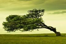 Gone green / by Lincoln Dalton