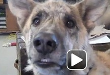 Videos / The talking dog video makes me laugh no matter how many times I watch it!