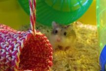 Hamster!! / I am getting a hamster... I have researched hamsters far too much. This if for cage setup and fun diy ideas